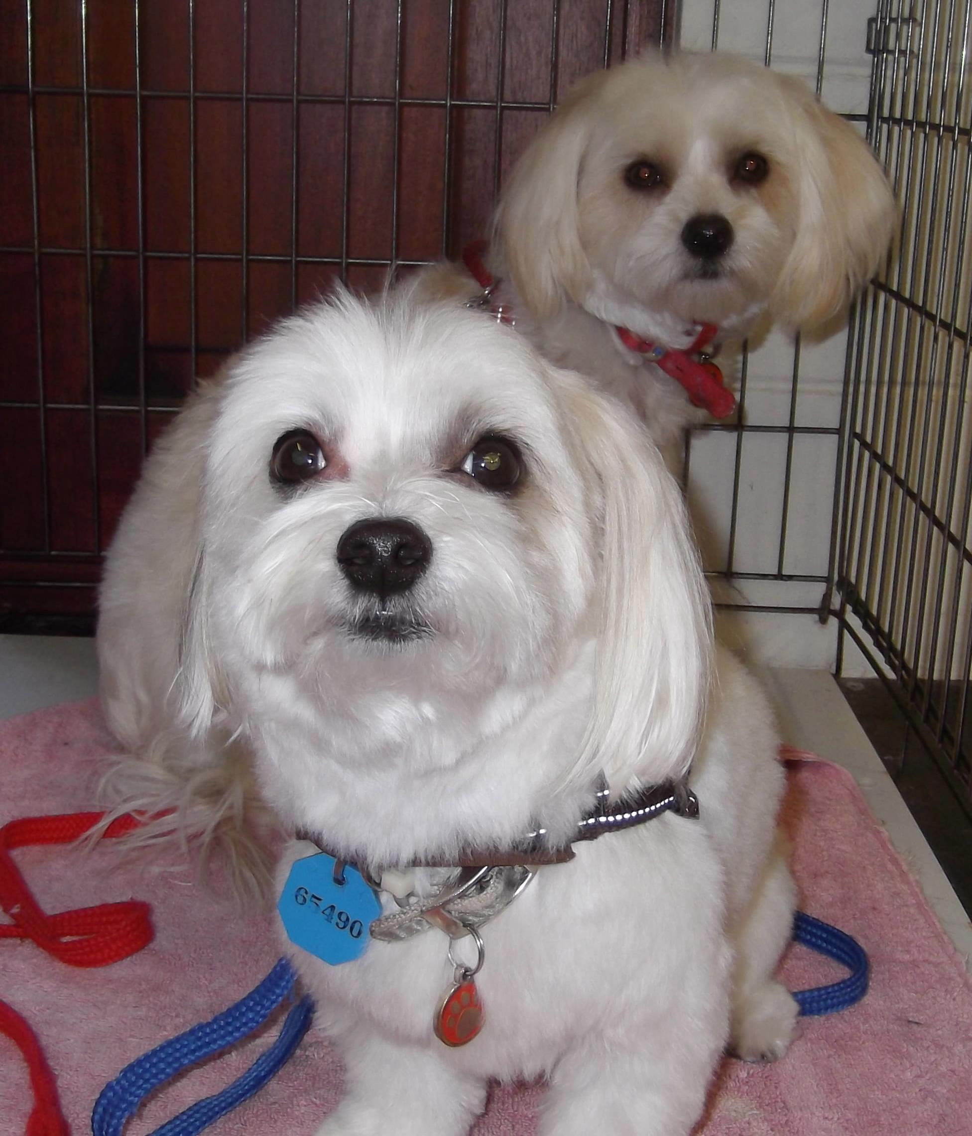 Buffy & bella